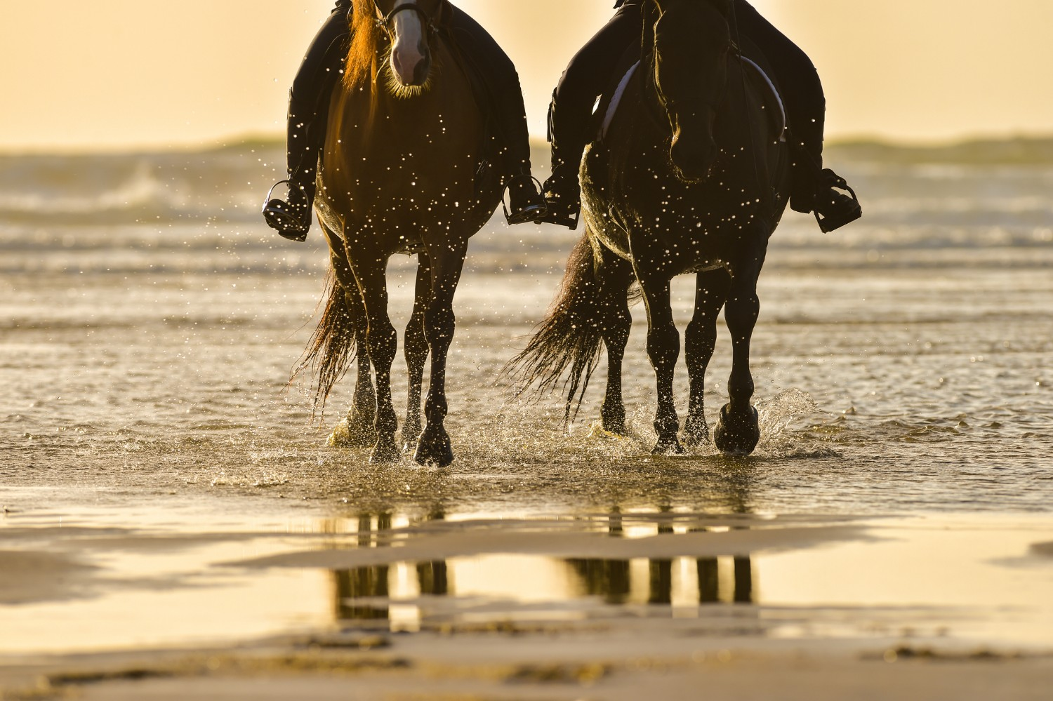 Horse riding on the beach at sunset,