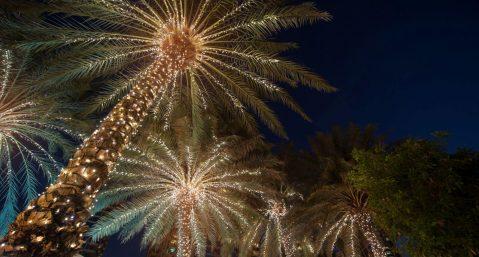 Christmas lights on palm trees